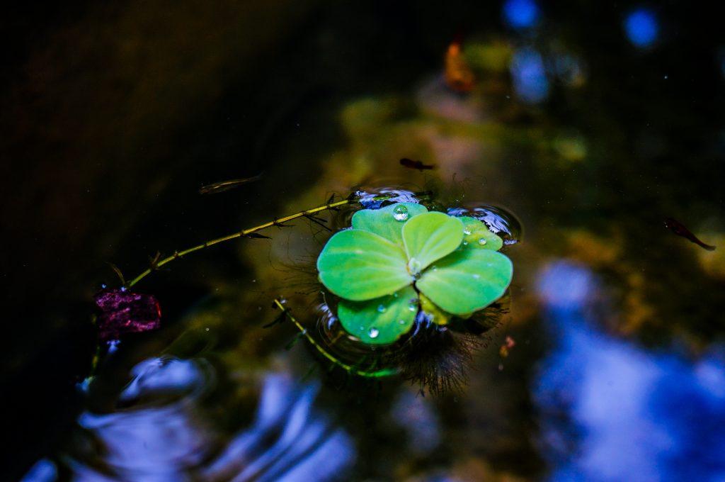 Ökosystem im Wasser